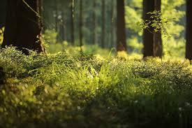 Ein Naturparadies in Bildern